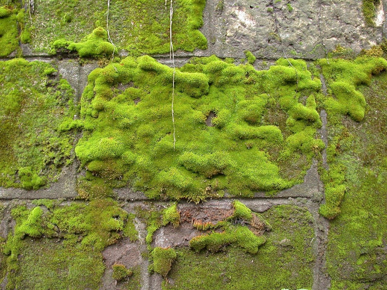 Nettoyage Dalle Piscine Javel comment nettoyer une façade des salissures, pollution
