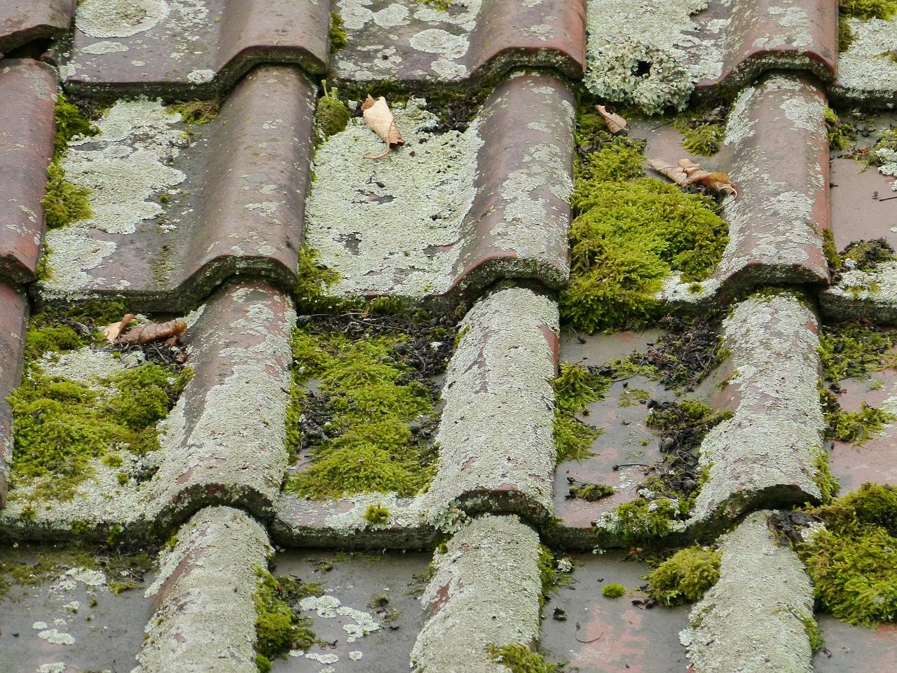Eau De Javel Anti Mousse Terrasse démousser son toit : comment nettoyer et entretenir une